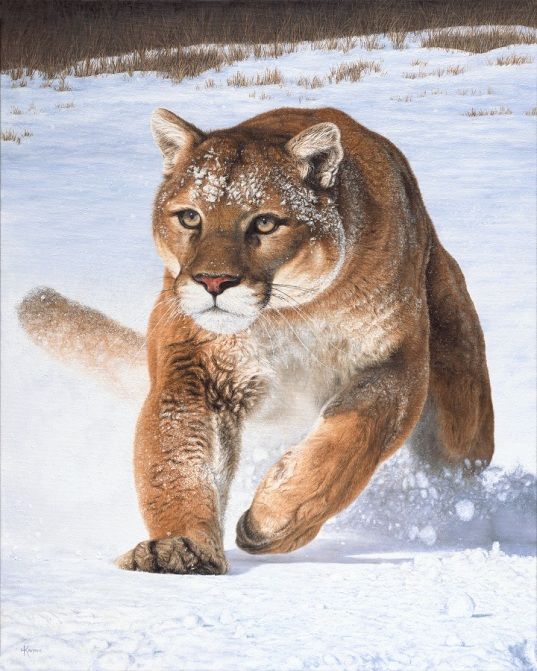 """Cougar in the Snow"" 24x30"" Limited Edition Giclee Prints available. Copyright Holly Kavonic"
