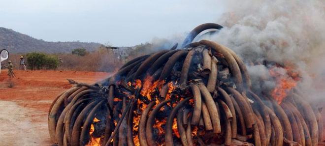subtheme-wildlifetrade-ivory_trade
