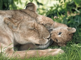 """Lioness and Cub"" 18x24"" Limited Edition Giclee Prints available. Copyright Holly Kavonic"