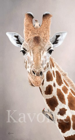 """Giraffe and Oxpeckers 1"" 14×26″ Limited Edition Giclee Prints available. Copyright Holly Kavonic"
